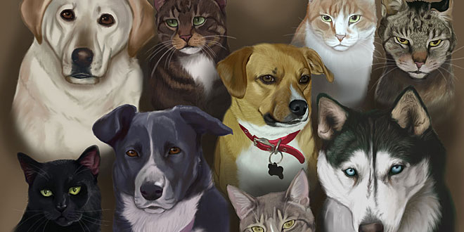 Pets and Veterinary